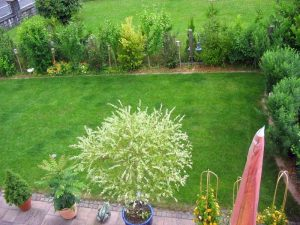 schöner Rasen